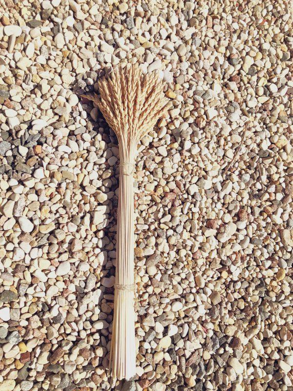 Kviečių šiaudai su varpomis