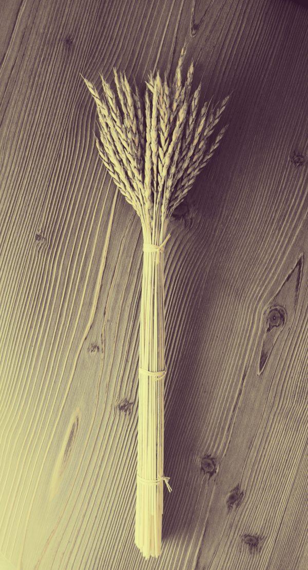 puokštė iš kviečių